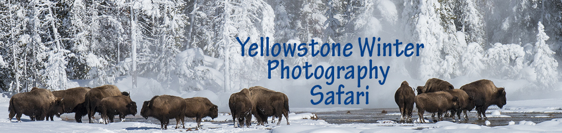 Yellowstone Winter Photography Tour with Nature Photography Adventures